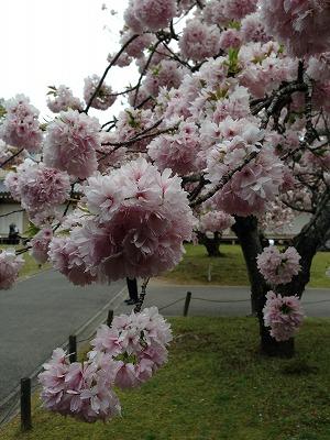 H26  醍醐寺2
